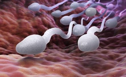 DIAGNOSTIC ANTÉNATAL: L'ARN du sperme du père prédit la santé de ses futurs enfants