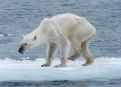 Parlons climat : (II) Ouragans, océans et ours polaires