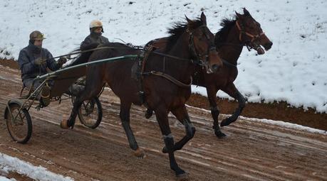 Le rôle du maréchal-ferrant dans les courses de chevaux