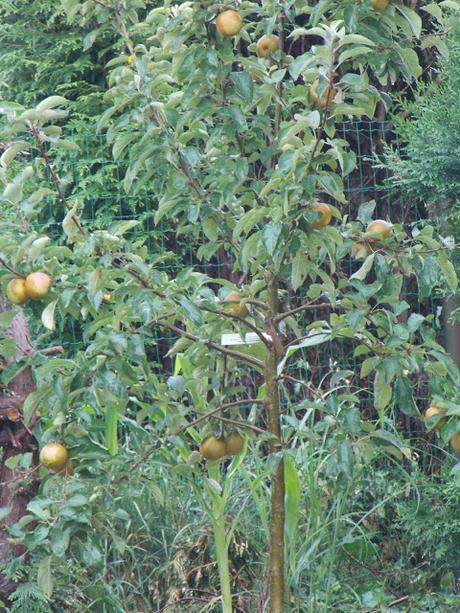 Pourquoi planter un pommier dans votre jardin ?