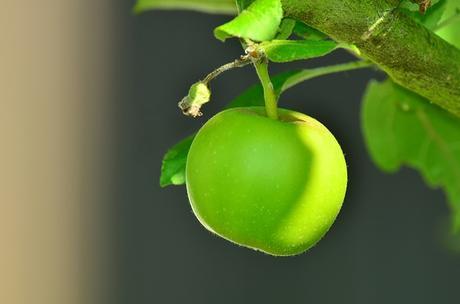 une pomme par jour peu importe qu'elle soit verte