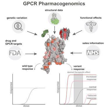 #cell #médicament #pharmacogénomique Pharmacogénomique des cibles RCPG des médicaments
