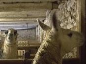 """Lamas """"humides"""""""