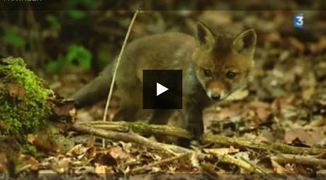 [Podcast #51] Des photos animalières qui apaisent avec Séverin Rochet