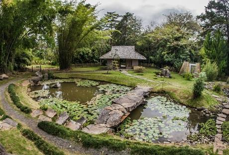 Visite du Jardin Botanique Lankester de Cartago