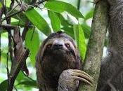 Passer revue quelques adresses incontournables Costa Rica