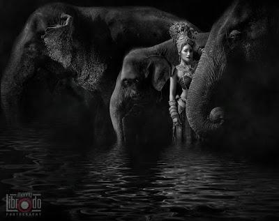 Thaïlande 2017, éléphants et touristes, des chiffres au beau fixe (vidéo)