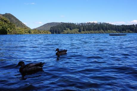 Nouvelle-Zélande : Rotorua