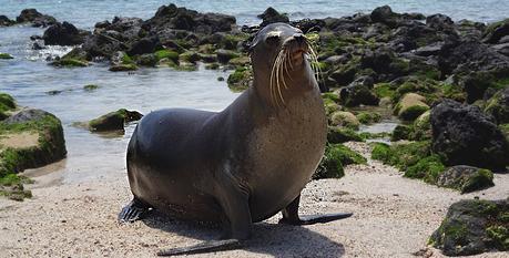 Voyage aux Galápagos lion de mer entete