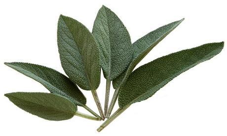 Les Herbes aromatiques (5)