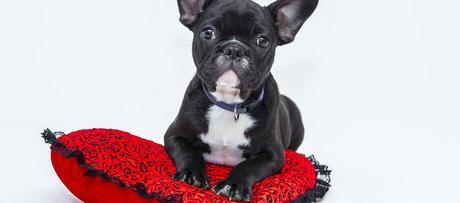 Où installer son panier pour chien?