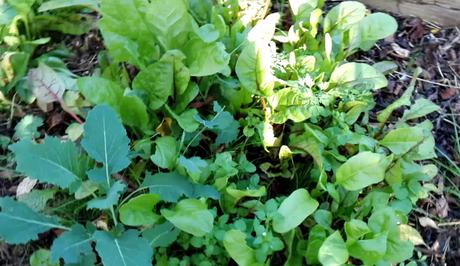 Comment faire un semis sur un sol paillé ?