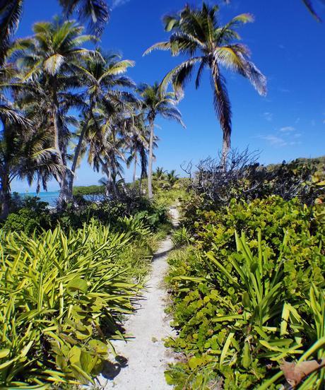 Visiter Isla Contoy au Mexique: Le guide!