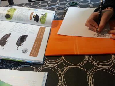Un lapbook sans dessin: impossible! Microfaune du sol