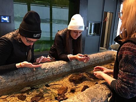 Quoi faire au Saguenay-Lac-Saint-Jean musée du Fjord