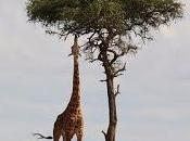 Visiter trois grands pays d'Afrique