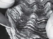 Catherine Flohic L'huître triploïde goût séduisant mais production néfaste