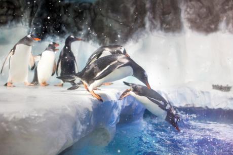 île aux Manchot Aquarium Sea Life Val d'Europe