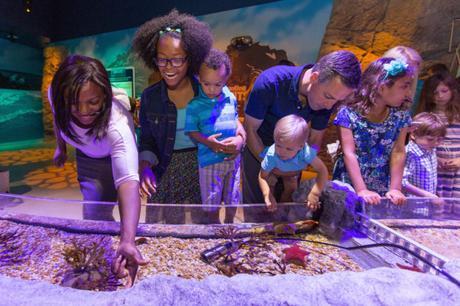 Visite aquarium Sea Life Val d'Europe