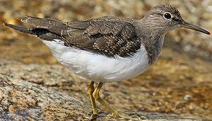 Les oiseaux de nos rivières