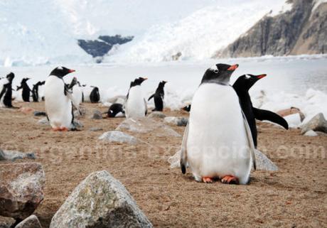 Envie d'une croisère au pôle Sud sur un circuit de 13 jours ?