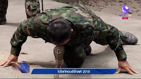 Thaïlande, jungle survival program, boire le sang du cobra (vidéo)