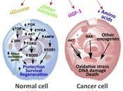#trendsinendocrinologyandmetabolism #nutriments #stress #cancer Privation nourriture, résistance stress, cancer