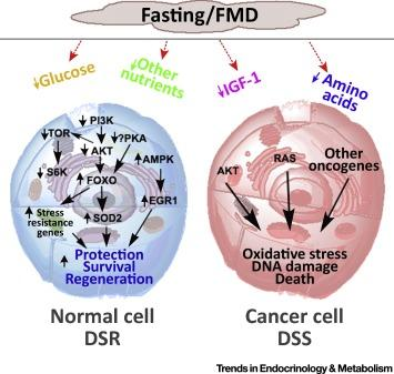 #trendsinendocrinologyandmetabolism #nutriments #stress #cancer Privation de nourriture, résistance au stress, et cancer