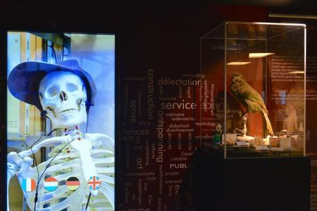 La Nuit au Musée ou la place de la vidéo dans un musée