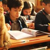 Cat Wanders Into Third-Grade Class - And Decides He's Never Leaving
