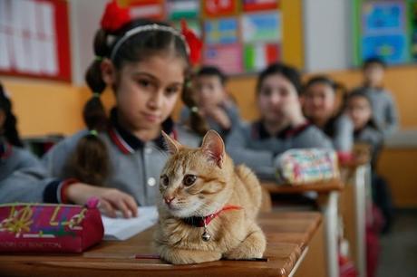 Tombi, un chat dans une classe