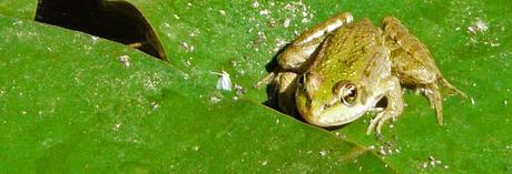 Bactéries et animaux dans les piscines naturelles