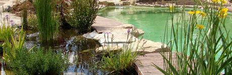 Quelles plantes choisir pour entretenir une piscine naturelle ?
