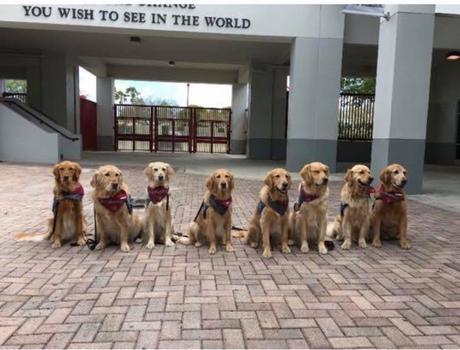 Les chiens du lycée de Parkland
