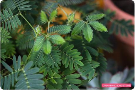 Comment arrêter de tuer ses plantes vertes ? 7 conseils de base !