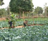 Cameroun : le développement rural pris en otage