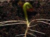 Time-lapse croissance plantes