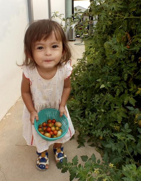 Udonthani : Ramassage des tomates pour Mélanie.