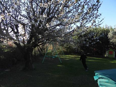 Joyeuses Pâques et fleurs de cerisiers