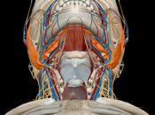 Atlas d'anatomie humaine édition 2018 iPhone 1.09 lieu
