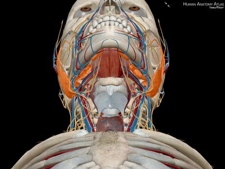 Atlas d'anatomie humaine édition 2018 sur iPhone à 1.09 € au lieu de 25 €