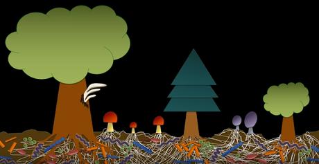 La biodiversité permet de nettoyer les sols contaminés
