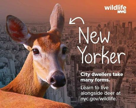 la faune surprenante de new york