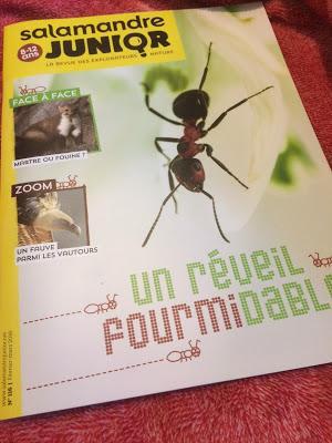 Magazine Salamandre Junior