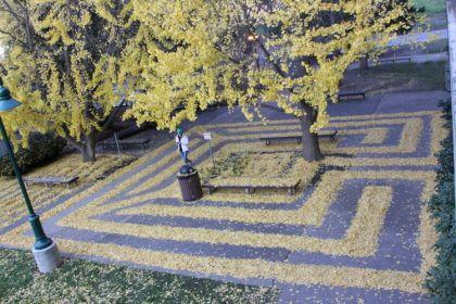Labyrinthes feuilles mortes de Joanna Hedrick