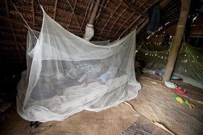 #thelancetinfectiousdiseases #paludisme #moustiquaireimprégnéd'insecticide Implications de la résistance aux insecticides sur l'utilisation de moustiquaires imprégnées d'insecticide à action de longue durée pour le contrôle du vecteur du paludisme : ét...