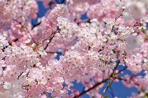 Deux poèmes d'avril