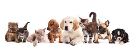 Très chers animaux de compagnie