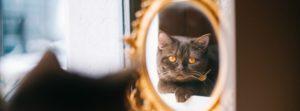 Le Gentle Cat