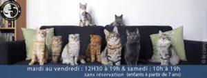 Le Comptoir des Chats